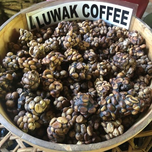 Kopi Luwak Kaffee kaufen Katzenkaffee teuerster Kaffee Kackkaffee