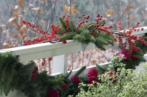 Weihnachtsdeko für Balkon Tannengrün Mistelbeeren am Gelände andere winterharte Pflanzen und Blumen