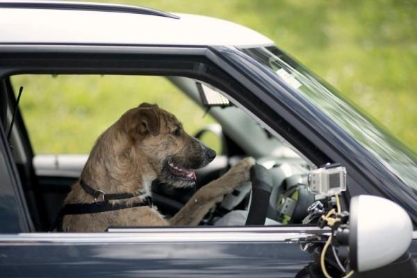 Wissenschaftler haben Ratten beigebracht winzige Autos zu fahren tierheim hunde fahren autos