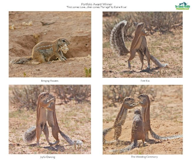 Comedy Wildlife Photography Awards 2019 – Hier die Gewinnerfotos first comes love then comes marriage