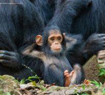 Comedy Wildlife Photography Awards 2019 – Hier die Gewinnerfotos