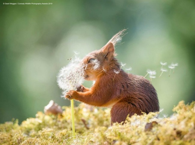 Comedy Wildlife Photography Awards 2019 – Hier die Gewinnerfotos squirrel wishes lustiges eichhörnchen