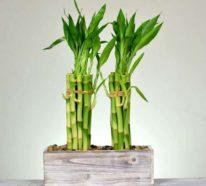 Grüne Glücksbringer – welche Zimmerpflanzen müssen Sie unbedingt zu Hause pflegen?