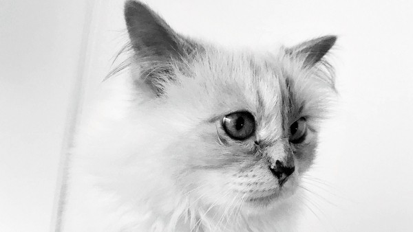 choupette trends karl lagerfeld