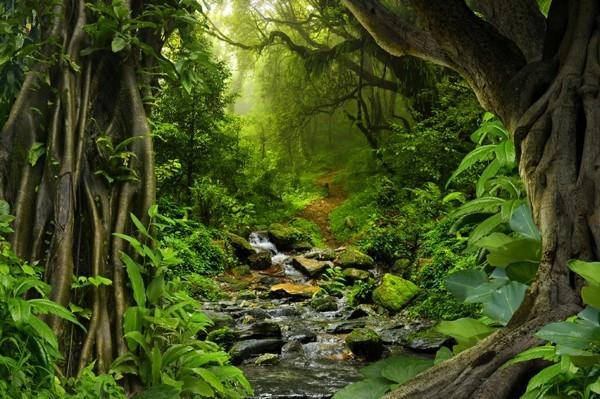 Guayusa Tee zubereiten Tipps Regenwald Ekuador