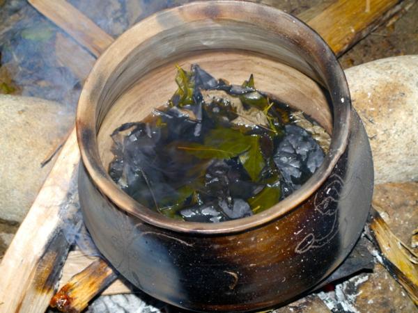 Guayusa Tee zubereiten Tipps gesundheitliche Vorteile