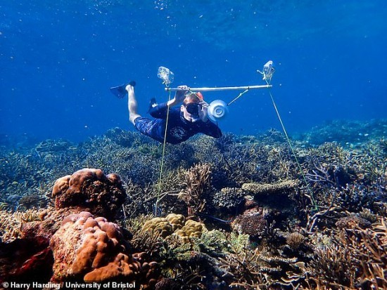 Unterwasserlautsprecher könnten zur Wiederherstellung beschädigter Korallenriffe beitragen doktorant setzt lautsprecher am boden auf
