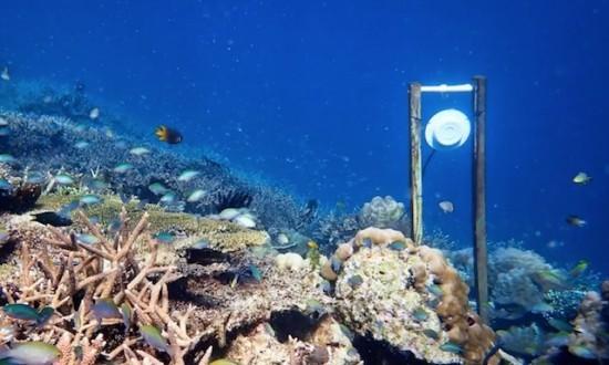 Unterwasserlautsprecher könnten zur Wiederherstellung beschädigter Korallenriffe beitragen lautsprecher am boden von korallenriff