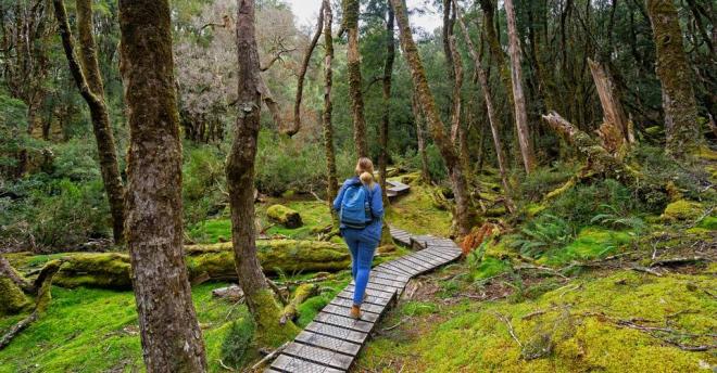 Australien 7 Sehenswürdigkeiten Bergpfad Waldwanderung in Tasmanien