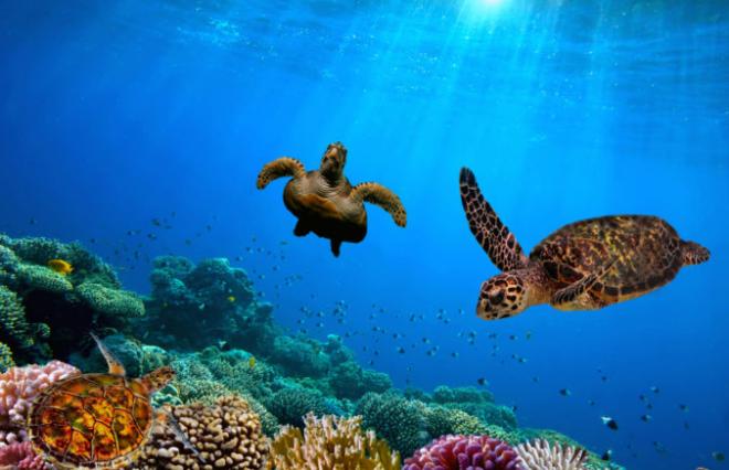 Australien 7 Sehenswürdigkeiten Unterwasserwelt Great Barrier Reef Schildkröten