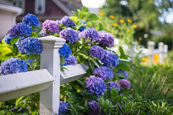 Hortensien schneiden Garten gestalten Tipps Ideen