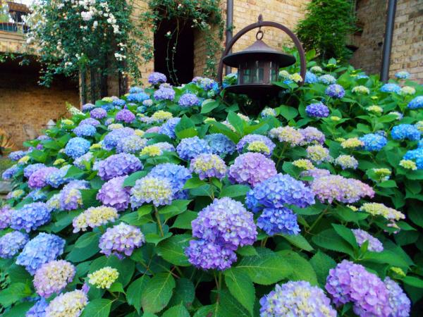 Hortensien schneiden - Wiese mit schönen Blumen