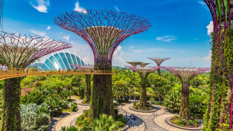 Reiseziele 2020 Singapur futuristische Gärten an der Bucht unbekannte Baumart