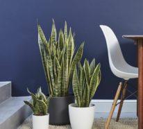 9 luftreinigende Büropflanzen für mehr Wohlbefinden und höhere Leistungsfähigkeit