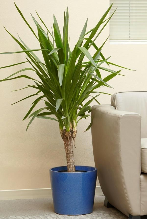 Yucca büropflanzen pflegeleicht