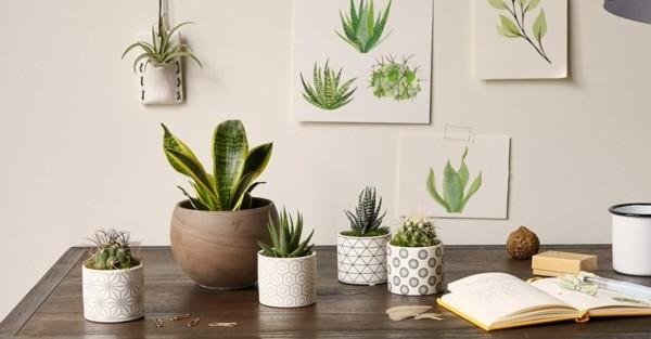 büropflanzen pflegen tipps