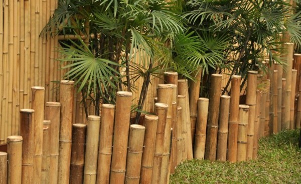 bambuszaun sichtschutz vorteile