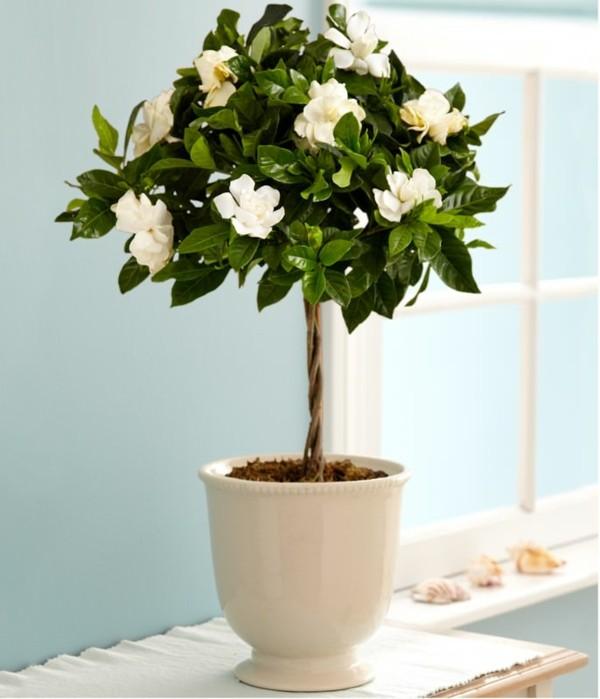 gardenie pflanzen im schlafzimmer