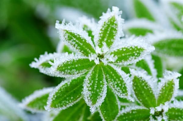 gartentipps für januar winterpflanzen