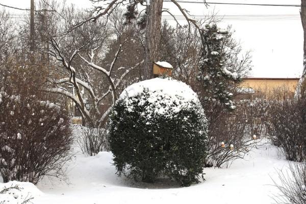 gartentipps im winter