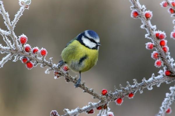 gartentipps januar vögel füttern