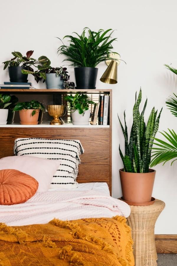 gesunde pflanzen im schlafzimmer