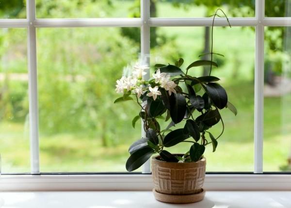 jasmin pflanzen im schlafzimmer