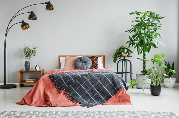 gesunde luftreinigende Pflanzen im Schlafzimmer