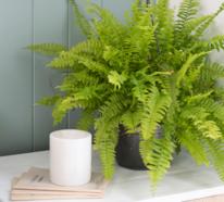Diese 7 luftreinigenden Pflanzen im Schlafzimmer fördern den guten Schlaf