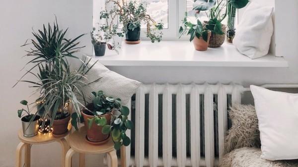 pflanzen im schlafzimmer luftreinigend