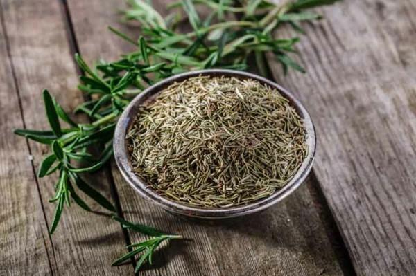 rosmarinöl samen pflanze gesund