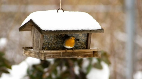 vogelgarten januar gartentipps