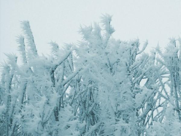 wintergarten januar gartentipps