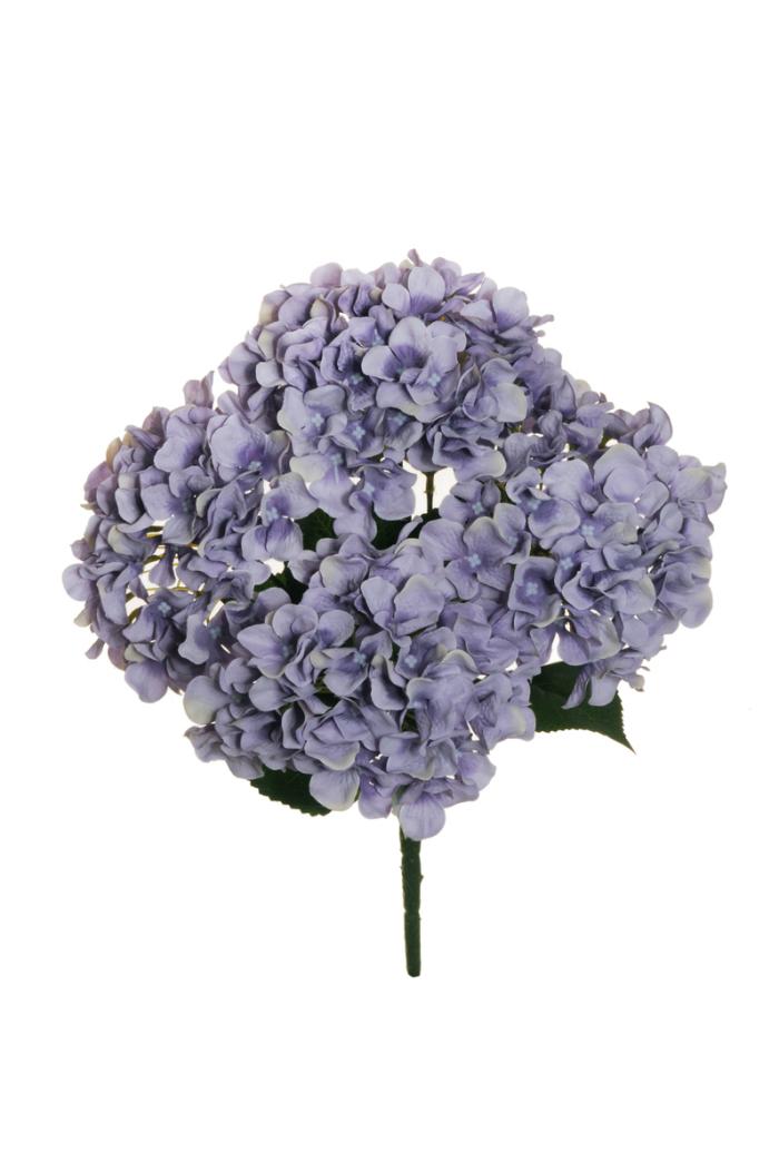 Blumen vermeiden blaue bis helllila Hortensien sind wunderschön unpassend als Geschenk zum Valentinstag