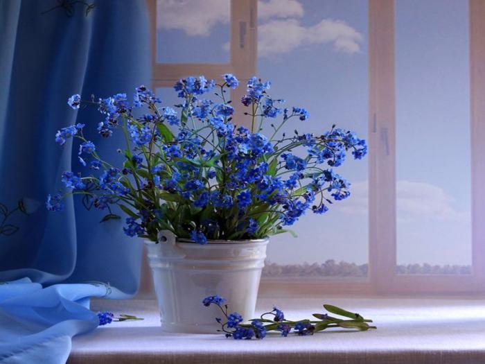 Blumen vermeiden schöne blaue Blumen schmücken die Fensterbank als Geschenk zum Valentinstag ungeeignet ideen