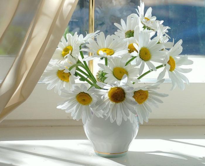 Blumen vermeiden weiße Margeriten in der Vase