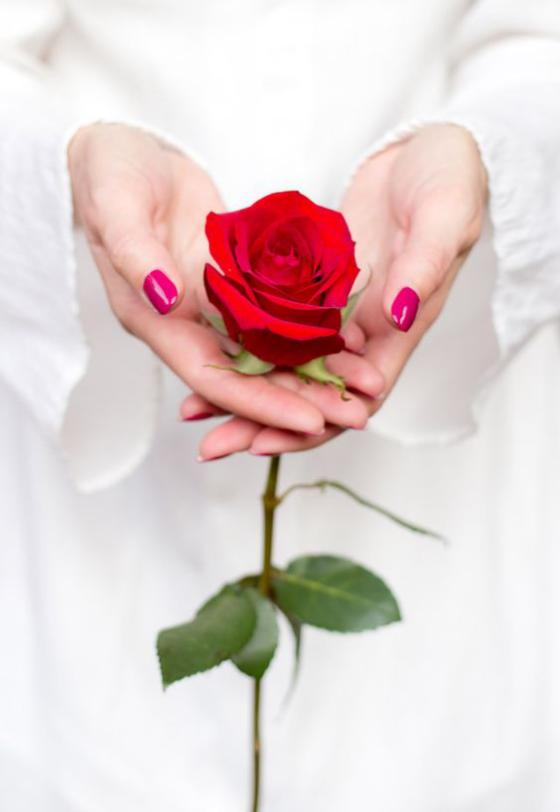 Blumen zum Valentinstag ideen rote Rose Symbol wahrer Liebe