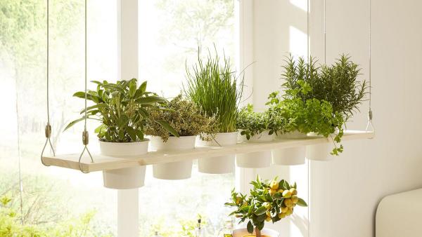 Dekoration fürs Fenster Kräuterregal