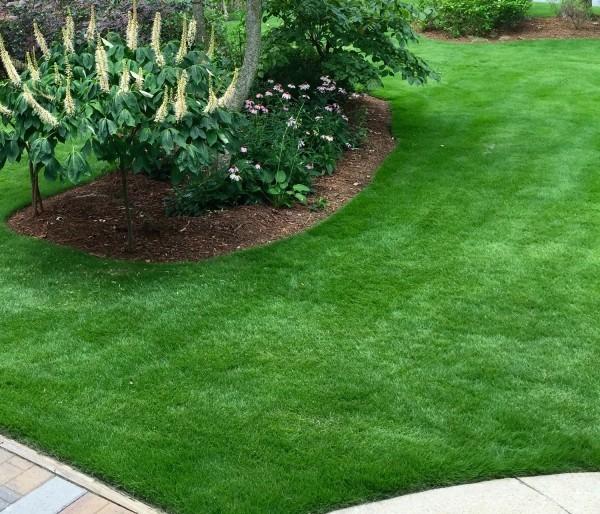 Ein Stück Erde mit einem Gebüsch Rasen düngen
