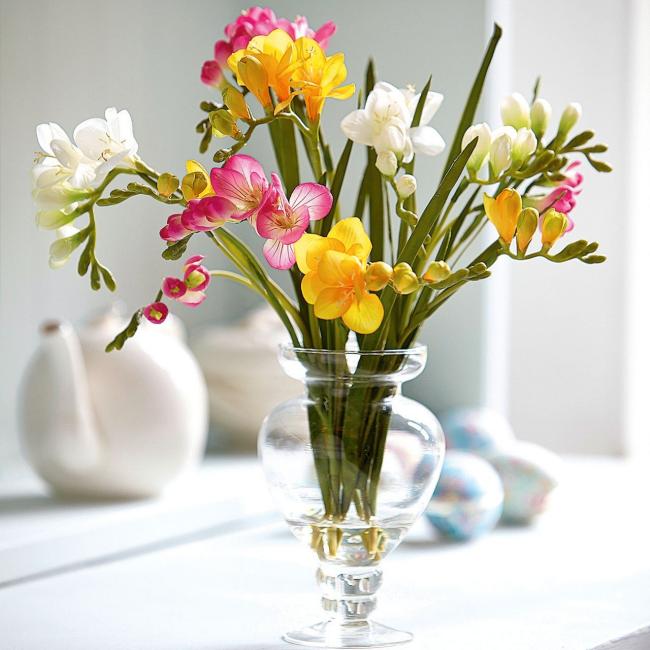 Freesien in Vase sehr elegantes Aussehen verschiedene Farben