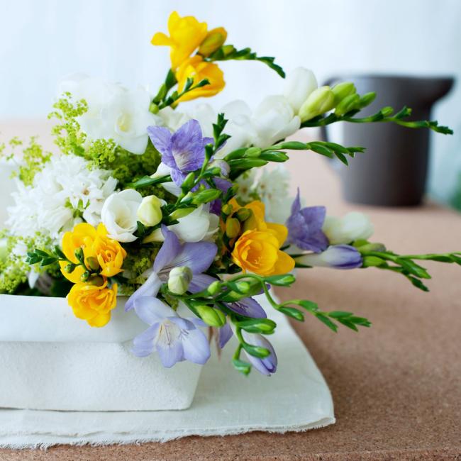 Freesien verschiedene Farben feiner Duft beste Tischdekoration zuhause
