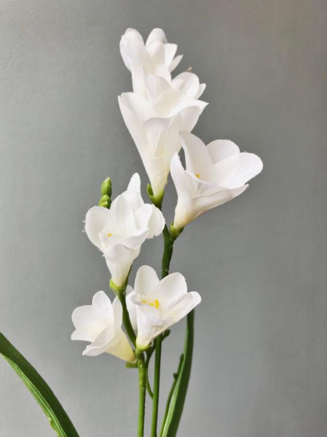 Freesien weiß makellose Schönheit zarte Blüten