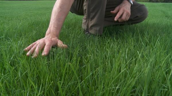 Hohen tollen grünen Rasen düngen