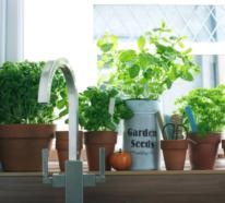 Kräuterregal – so werden Sie es am besten in die Inneneinrichtung integrieren!