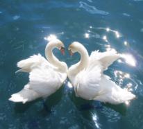 13 Liebessymbole und Geschenkideen für den Valentinstag