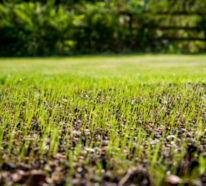 Der Frühling ist bald da: So würden Sie erfolgreich den Rasen düngen!