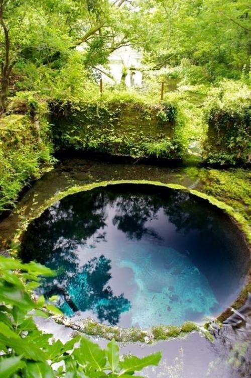 Runde Gartenpools rundes Becken als Gartenteich in Boden eingebaut üppiges Grün rund herum