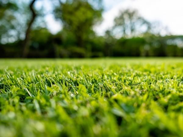 Schöne Aussicht - tollen Rasen düngen