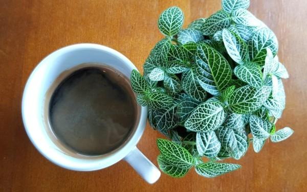 zimmerpflanzen kaffeesatz als dünger