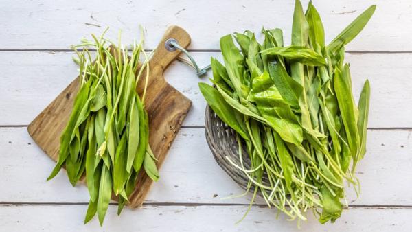 Bärlauch oder auch Wilder Knoblauch Medizin aus der Natur breite Anwendung in der Küche
